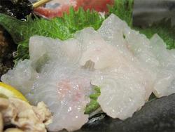 12虎魚(おこぜ)がん見@海の路