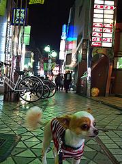 2土曜日の夜@中洲・散歩・チワワ