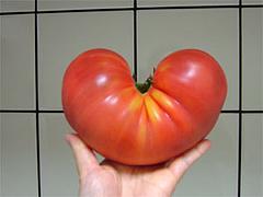 ハート形のトマト