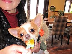 19店内:ペット同伴OK@baby's cafe(ベイビーズカフェ)・ドッグカフェ
