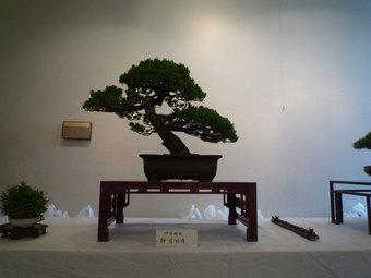 戸田市盆栽