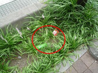 市役所南通りの植え込みに捨てられたゴミ