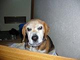 先日、紹介しました愛犬ダンの最後の写真