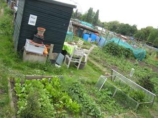 貸農園(菜っ葉)