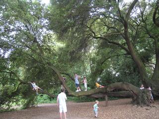 木登りして遊ぶ子供達