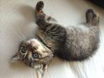 木村家のお猫様_8994