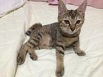 木村家のお猫様_7641