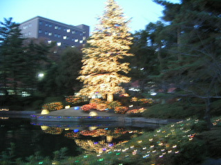 学園クリスマスツリー