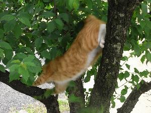 木登り後2