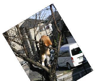 チャオ木登り