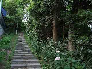 アジサイの道