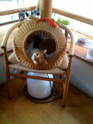 癒し系ネコ