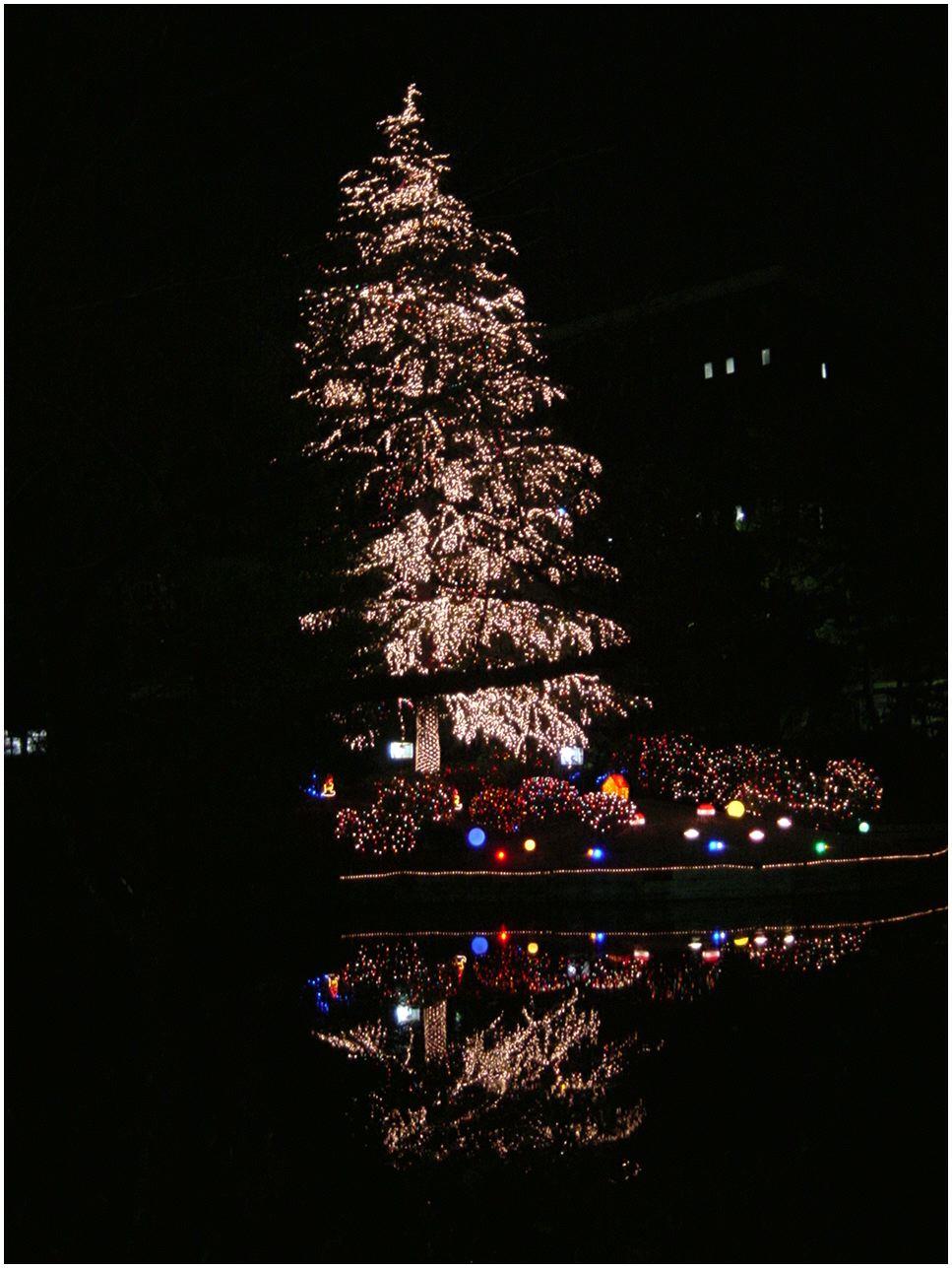 2004クリスマスツリー
