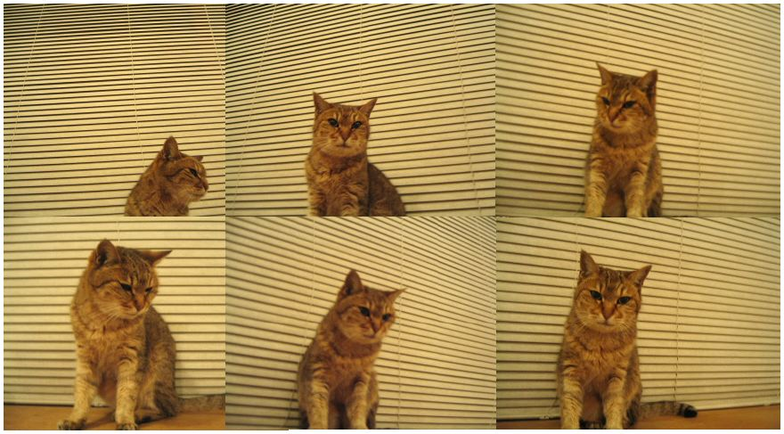ブルーな猫