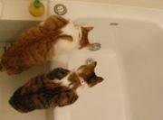ネコお風呂2