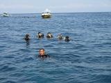 3-diving-1020-006