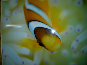 Blahbatu-20111220-00628