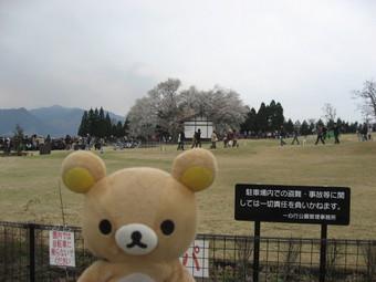 一心行の桜♪1