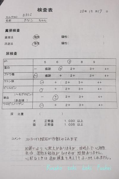 DSCF5389