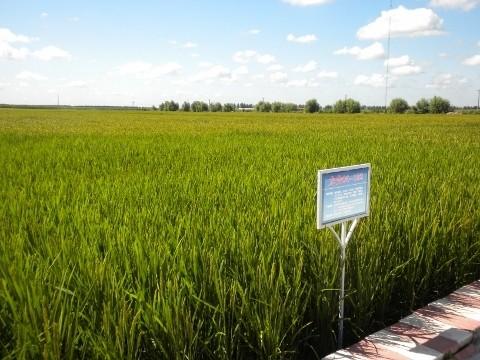 20110430_rice1