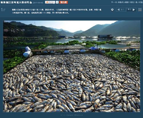 20110905_fish_death1