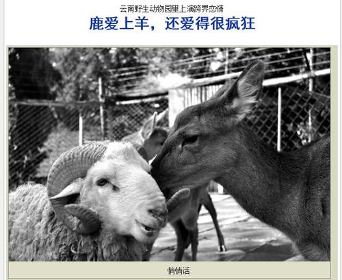 20111129_シカ_羊_禁断の恋_1