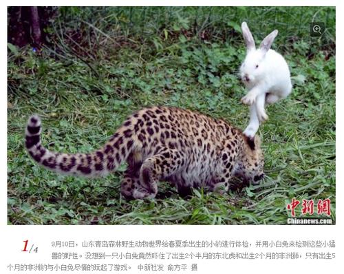 20130913_写真_中国_ウサギ_