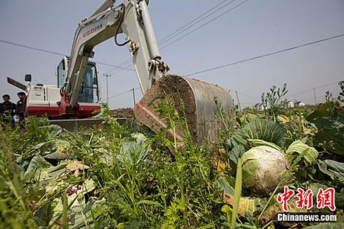 20110502_vegetable