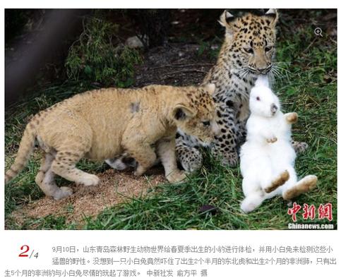 20130913_写真_中国_ウサギ_2