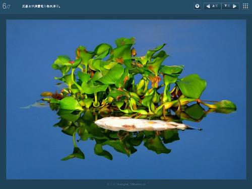 20110905_fish_death3