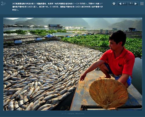 20110905_fish_death4