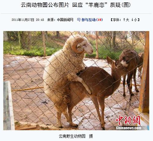 20111129_シカ_羊_禁断の恋_4