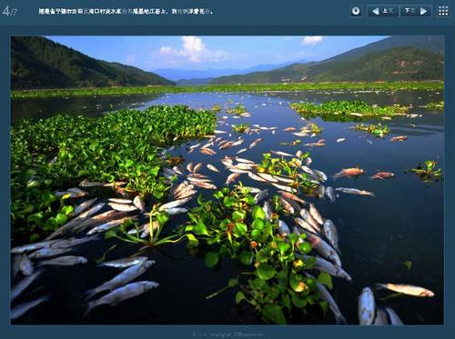 20110905_fish_death2