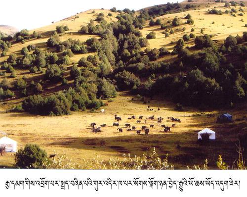 20120715_写真_チベット_1