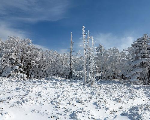 山上ヶ岳_お花畑の霧氷