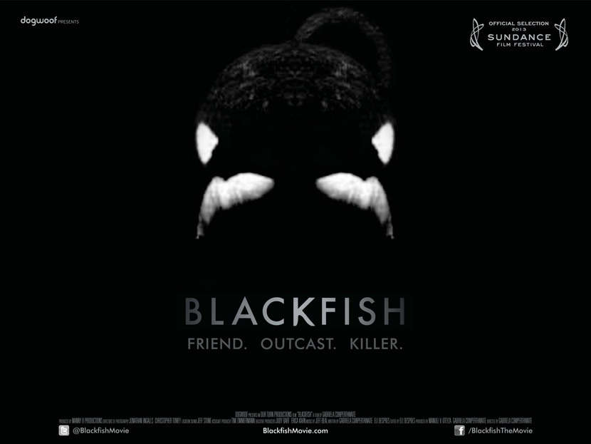 Dogwoof_Documentary_Blackfish_Quad_