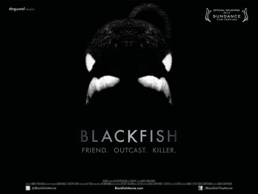 Dogwoof_Documentary_Blackfish_Quad_