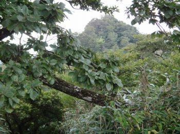 釈迦岳12