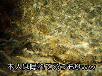 タイドプールで小魚