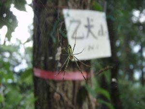 乙犬山蜘蛛
