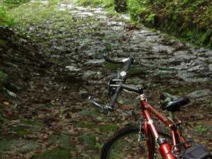 冷水自転車