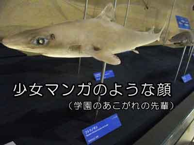 フトツメザメ