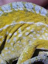 最後は黄色の絨毯