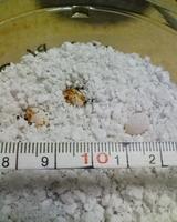 ウサンバラの卵