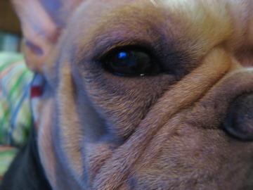 Jessie's_eye02