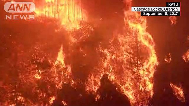 【朗報】山に花火を投げ入れた少年、40億請求されてしまう
