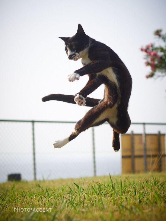 【画像】思わず師匠と呼びたくなるネコの写真が「ベスト・キャット」すぎると話題にwwwwwwwwwwwww