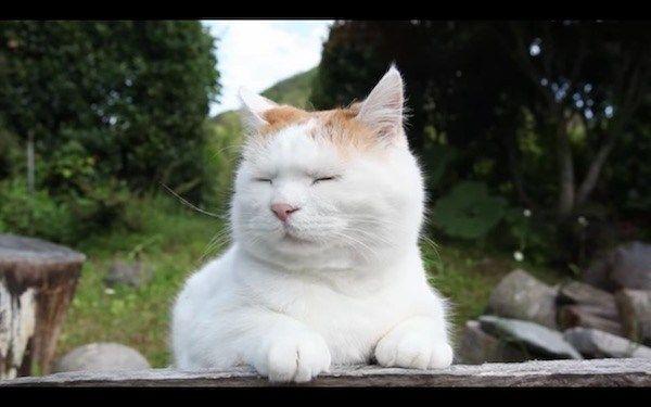 【画像あり】眠たそうなネコにレタスを乗せると似合う
