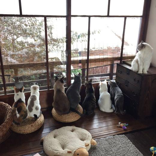 【画像】ネッコ「めっちゃ雪降ってるやんけ・・・」