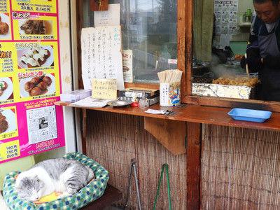 【画像】たこ焼き屋の看板猫がSNSで話題に!なおたこ焼きは売れない模様wwwwwwww